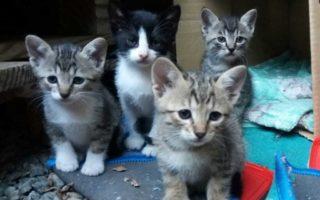 Adaptação de um novo gatinho em casa