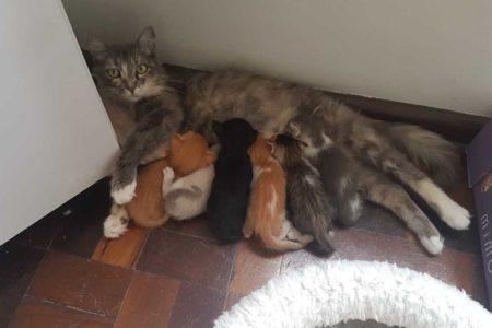 Como cuidar de uma gatinha prenha?