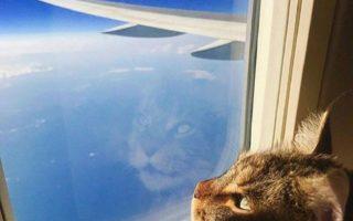 viagem internacional gatos