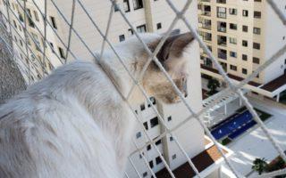 Telas de proteção para gatinhos
